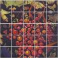 Grapes by Carlton Bjork