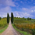 chianti-lane-by-john-scanlan