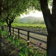 spring-in-the-vineyard-vertical
