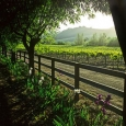 springtime-in-the-vineyard-by-kirk-irwin