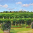 vineyard-view-by-carol-saxe